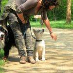 Dressage chien - Education canine Paris Ile de France