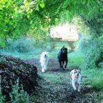 Promenade de chien, balade de quartier à Paris