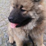 Promenade de chien, Dressage et Pension canine