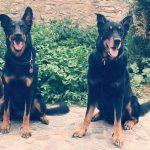 Garde de chien dans le Val de Marne