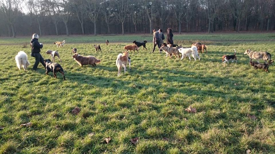 promenade chien bois de vincennes