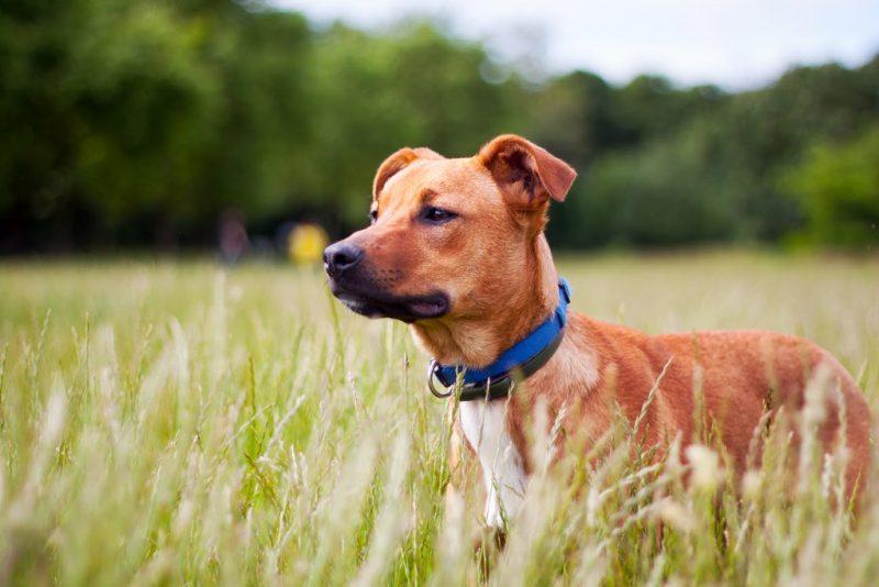 chien dans le bois de vincennes