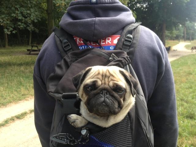 balade carlin sac à dos