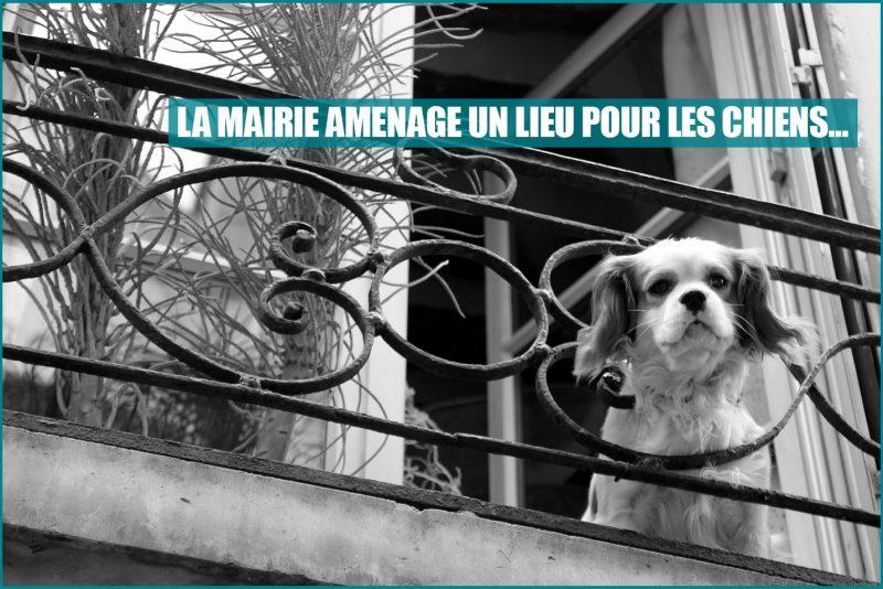 mairie de paris chien