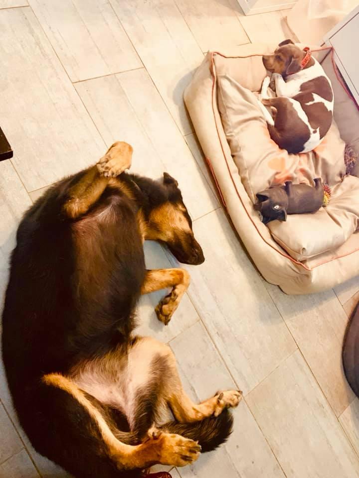 chiens dans un panier pour chiens