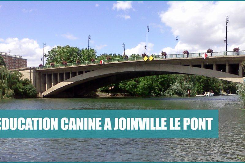 dressage chien joinville le pont