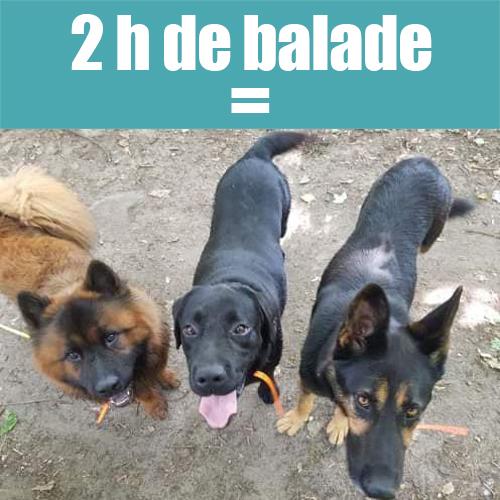 Une image contenant chien, extérieur, noir, assis Description générée automatiquement