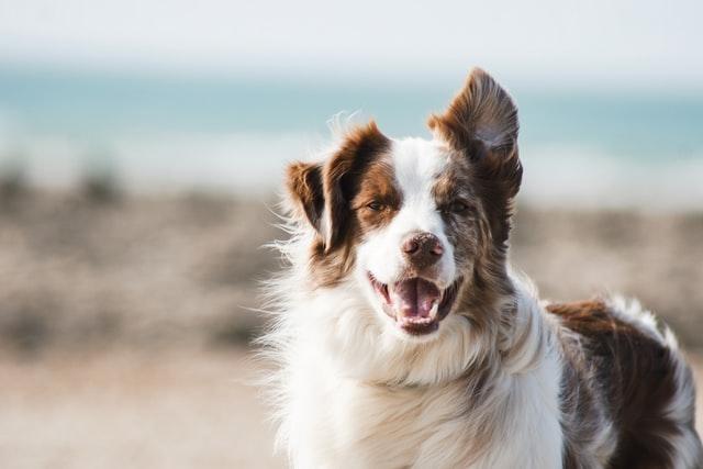 éducation canine val de marne
